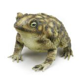 Large Toad 18cm