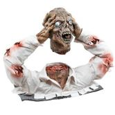 Cut Off Zombie Head Display